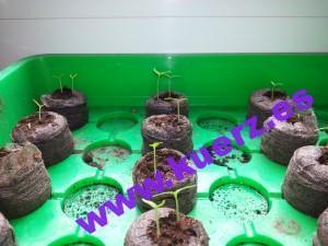 So sehen die Pflanzen nach zwei Wochen aus